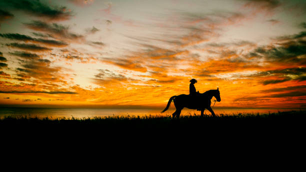 Lone Cowboy Lone cowboy on horseback in a field with as sunset. appaloosa stock pictures, royalty-free photos & images