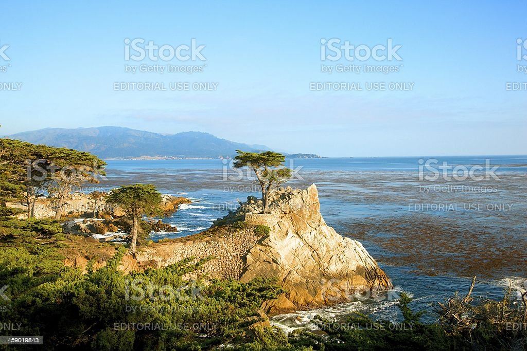 Lone Cypress Pine Tree at Pebble Beach CA royalty-free stock photo