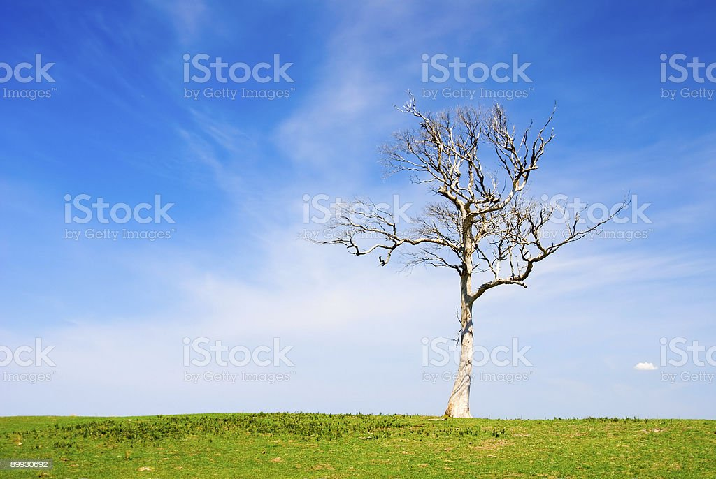 Lone Dead Tree in Paddock royalty-free stock photo