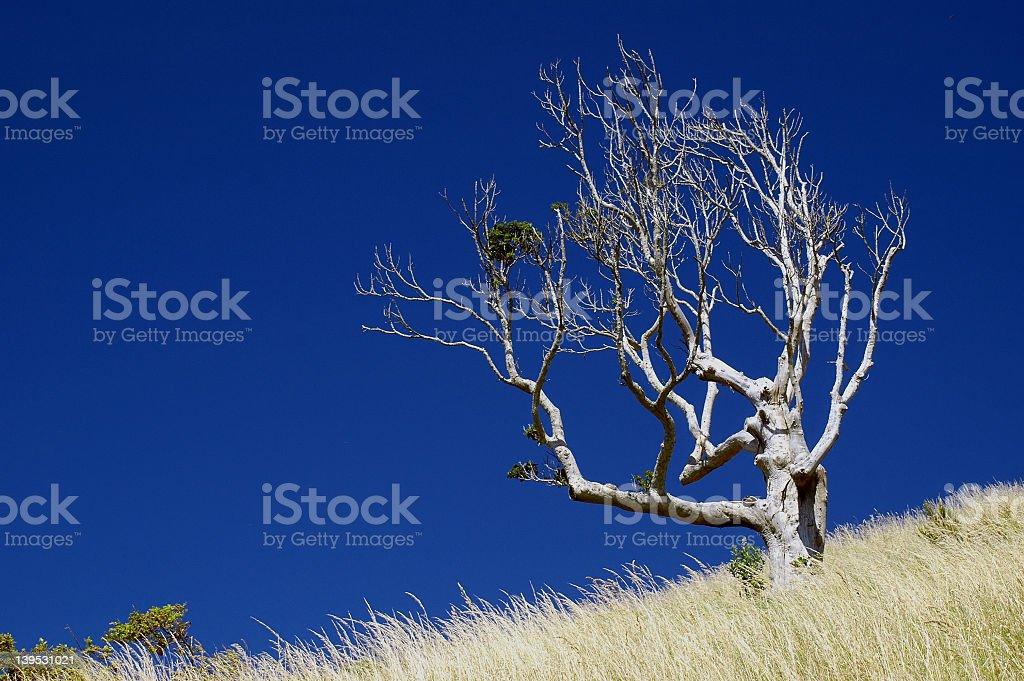 Lone Dead Tree royalty-free stock photo