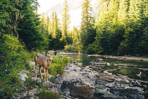 cervo solitario in una foresta. - fauna selvatica foto e immagini stock