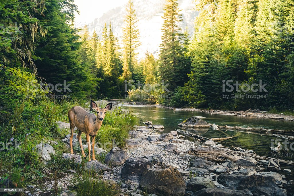 Lone deer in a forest. bildbanksfoto