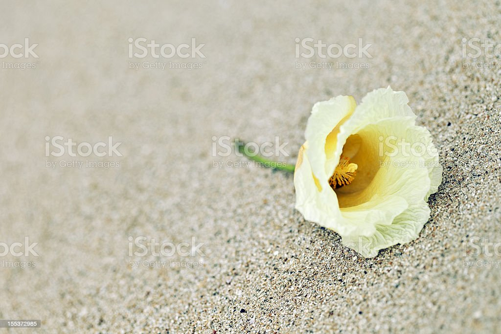 Lone flower royalty-free stock photo