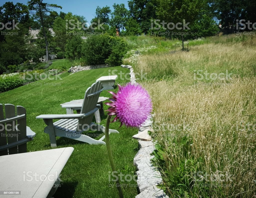 Lone Flower stock photo