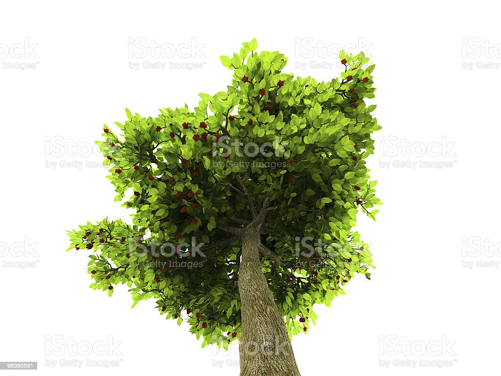 Lone green tree isolated on white - Royalty-free Botany Stock Photo