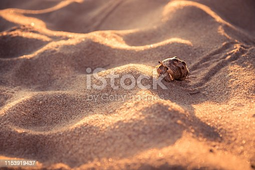 Lone hermit crab crawling across beach sand dunes towards shelter concept for way forward