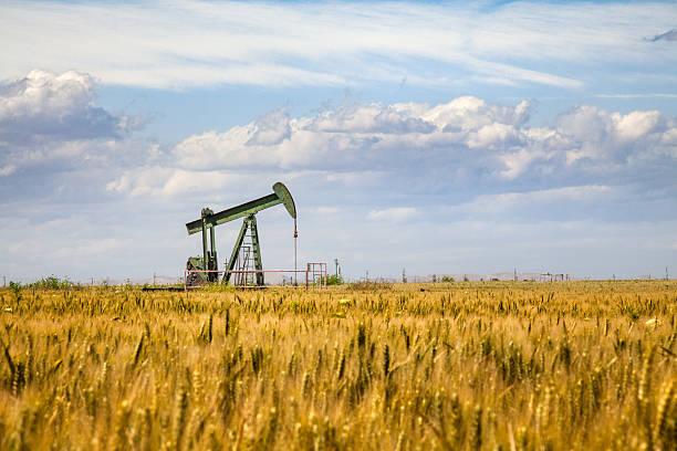 Lone Oil Pumpjack Amidst A Field of Golden Wheat An oil pump looms overs a crop of wheat in Bakersfield, California, where the agricultural production of the Central Valley is often in close proximity with petroleum deposits. amidst stock pictures, royalty-free photos & images