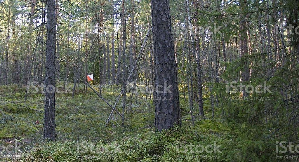 Lone Orienteering Control royalty-free stock photo