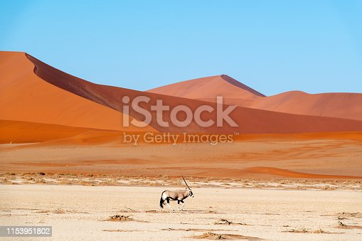 Morning and evening light on the dunes and a lone oryx  in Namib-Naukluft National Park, Namibia.