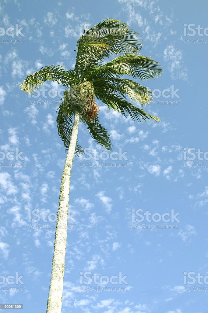 lone palm in sunny blue sky royalty-free stock photo