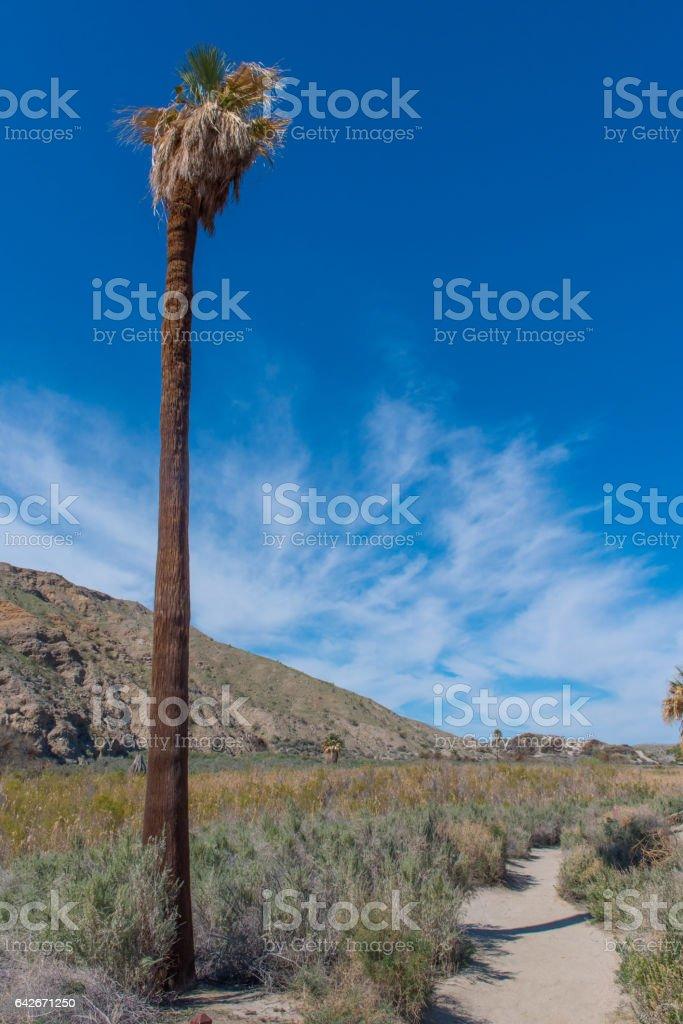 Lone palm tree next to a hiking path stock photo
