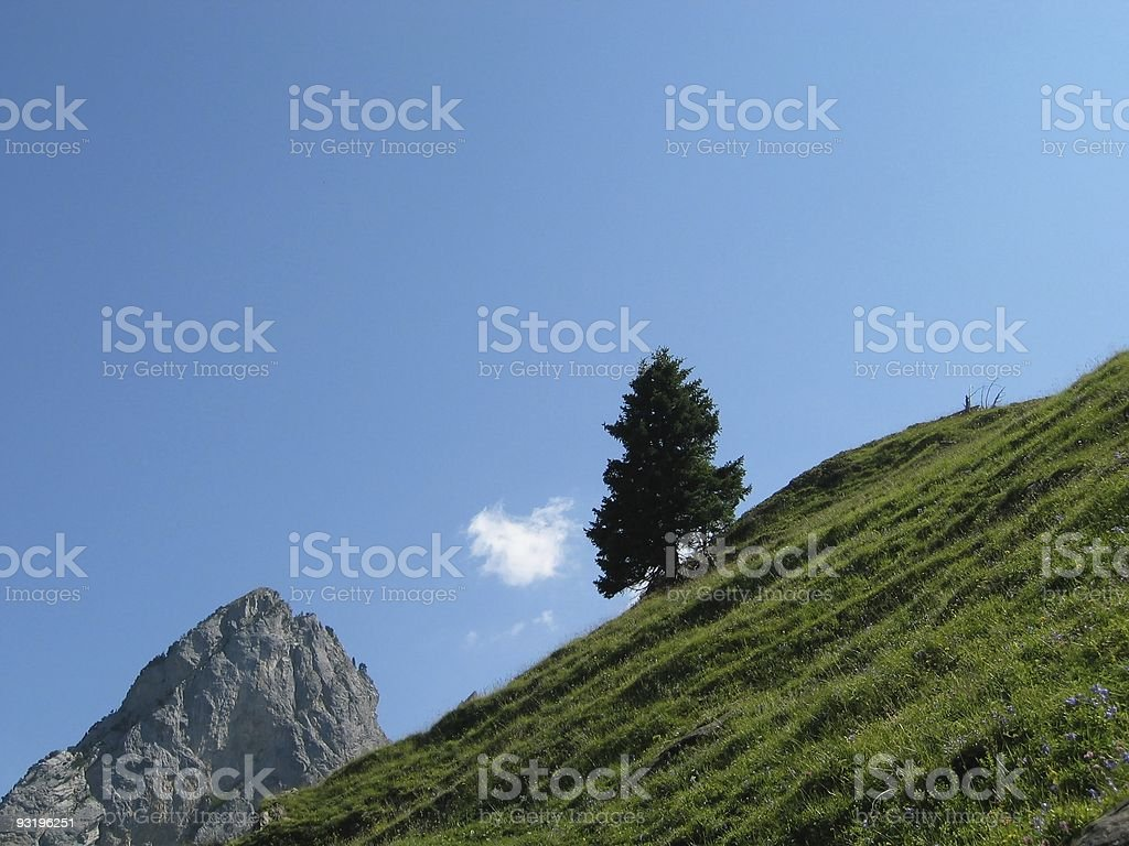 lone ? royalty-free stock photo