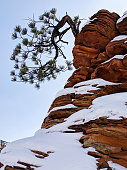 Lone pine tree and melting snow on red rock cliffs along the scenic road near Checkerboard Mesa in Zion National Park Utah