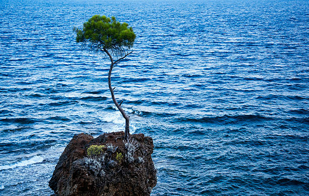 lone pine tree - endurance stock pictures, royalty-free photos & images