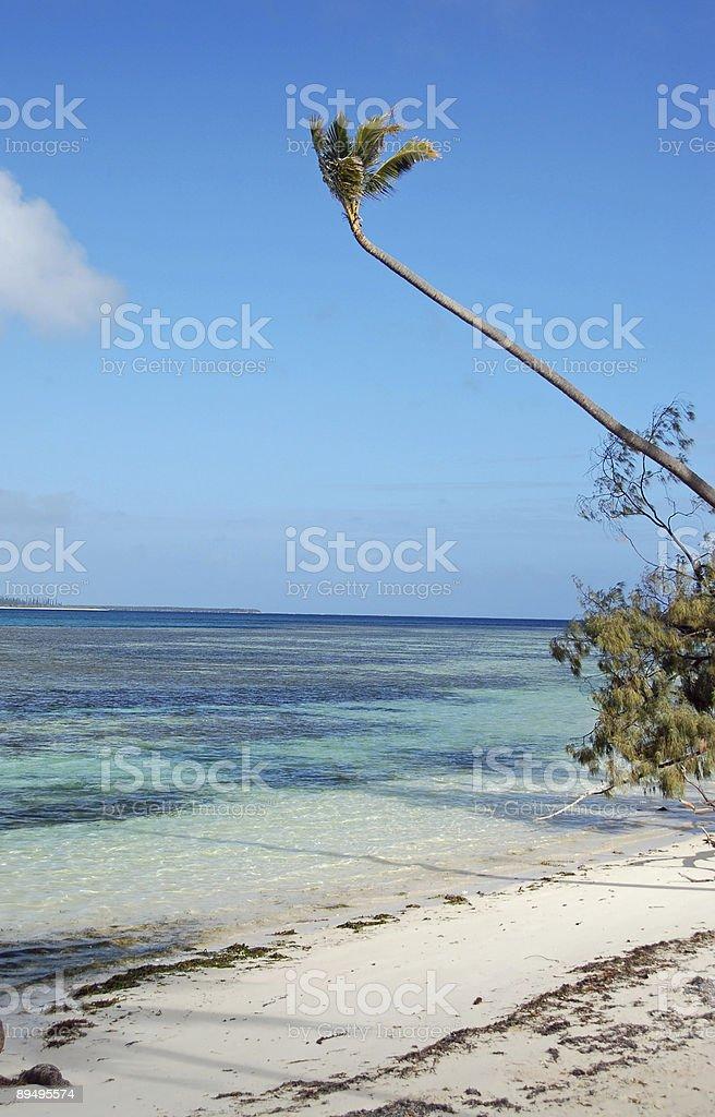Lone Plam Tree zbiór zdjęć royalty-free