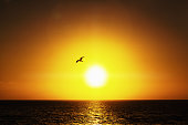 A bird representing freedom, hope or individuality flies in a clear sky against a magnificent golden sunset over the sea.