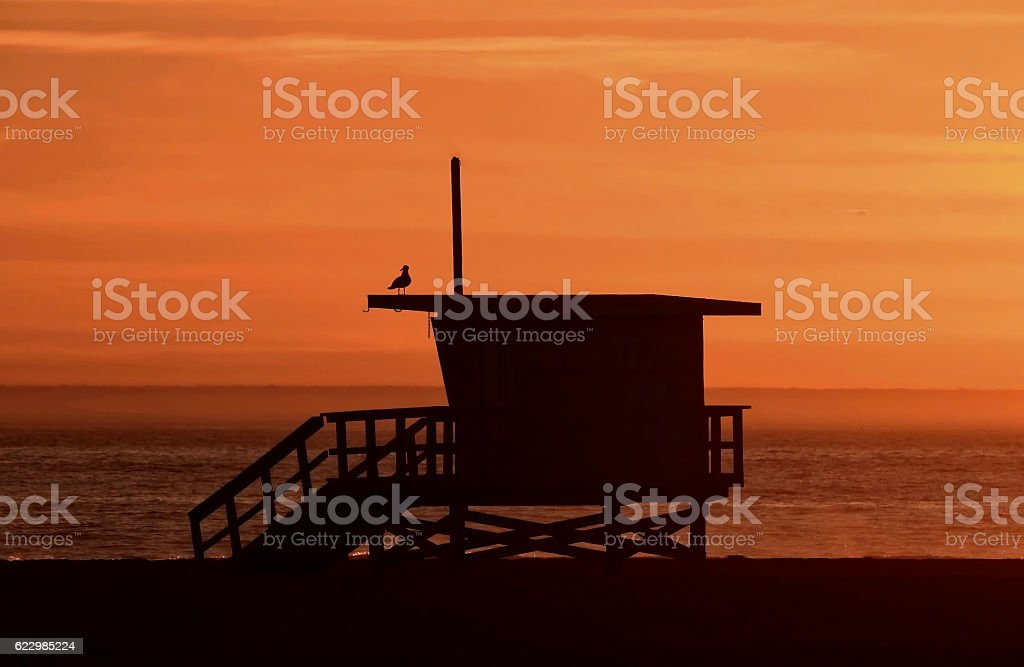 Lone Seagull on Lifeguard Tower at Sunset stock photo