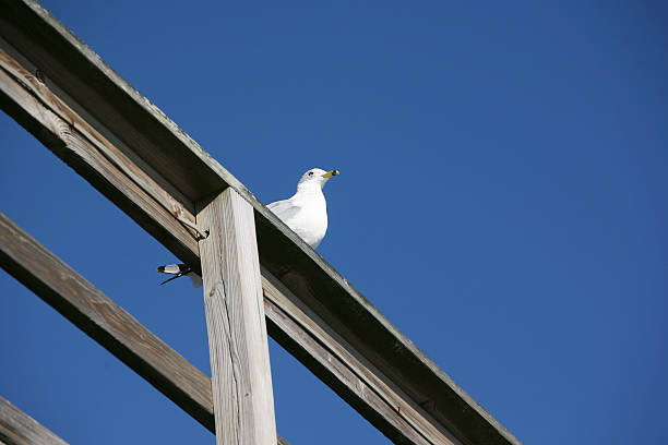 lone seagull on pier