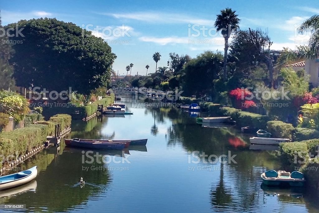 Lone Seagull Swimming Venice Canals stock photo
