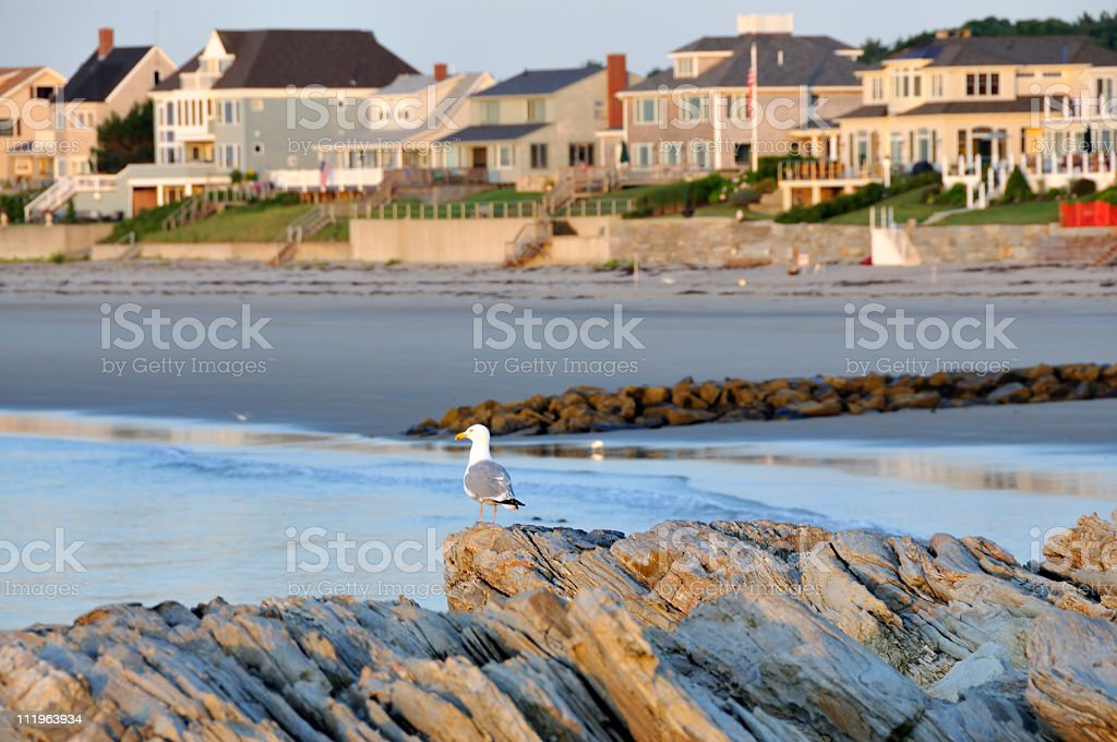 Lone Seagull Watches Over Beach Homes stock photo