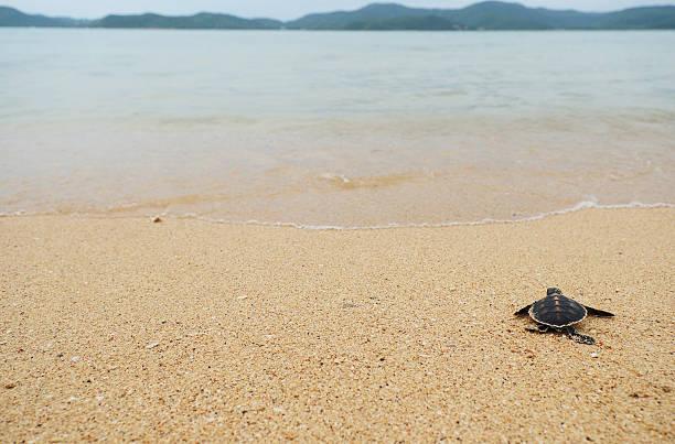 kleine schildkröte go oceans - rettungsinsel stock-fotos und bilder