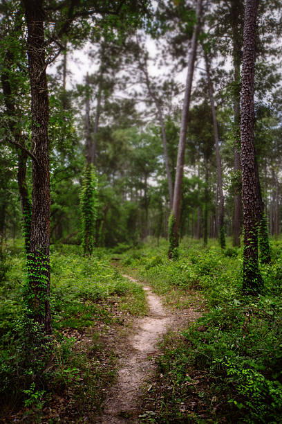 Lone Star hiking trail Sam Houston National Forest, Texas USA national forest stock pictures, royalty-free photos & images