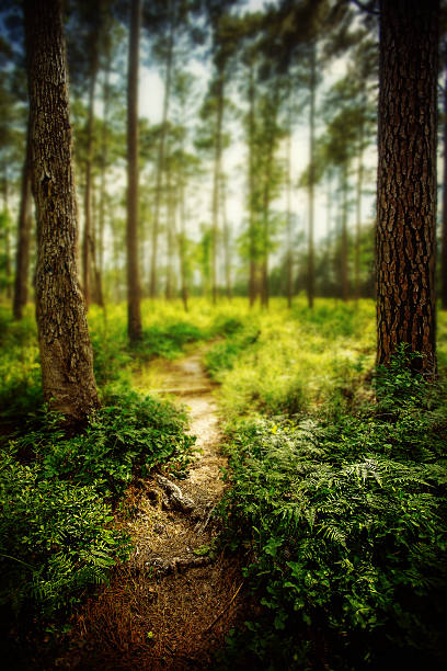 Lone Star hiking trail Sam Houston National Forest national forest stock pictures, royalty-free photos & images