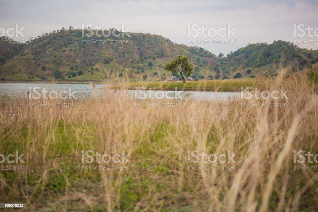 Lone Survivor stock photo
