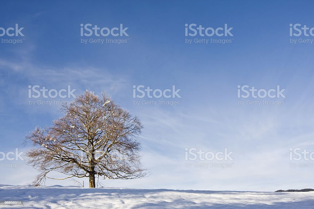 Lone tree against a winter setting royalty-free stock photo