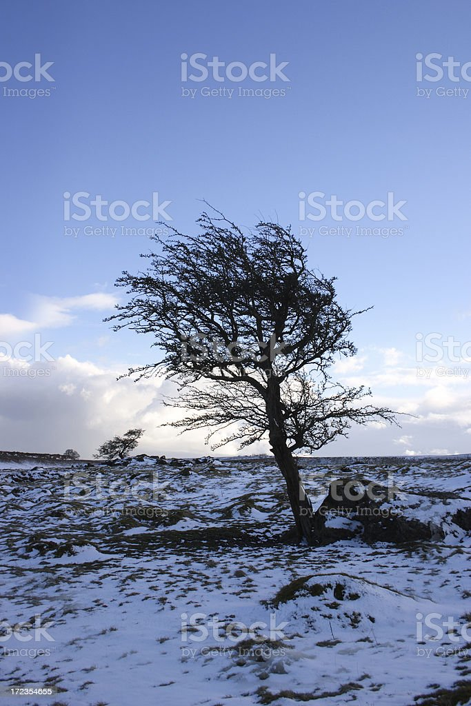 Lone tree against winter dusk royalty-free stock photo