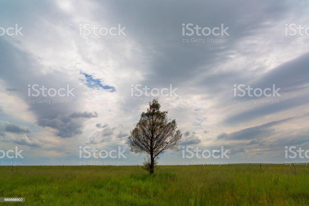 Lone tree and clouds Lizenzfreies stock-foto