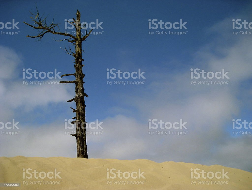 Lone Tree and Dune, Oregon stock photo