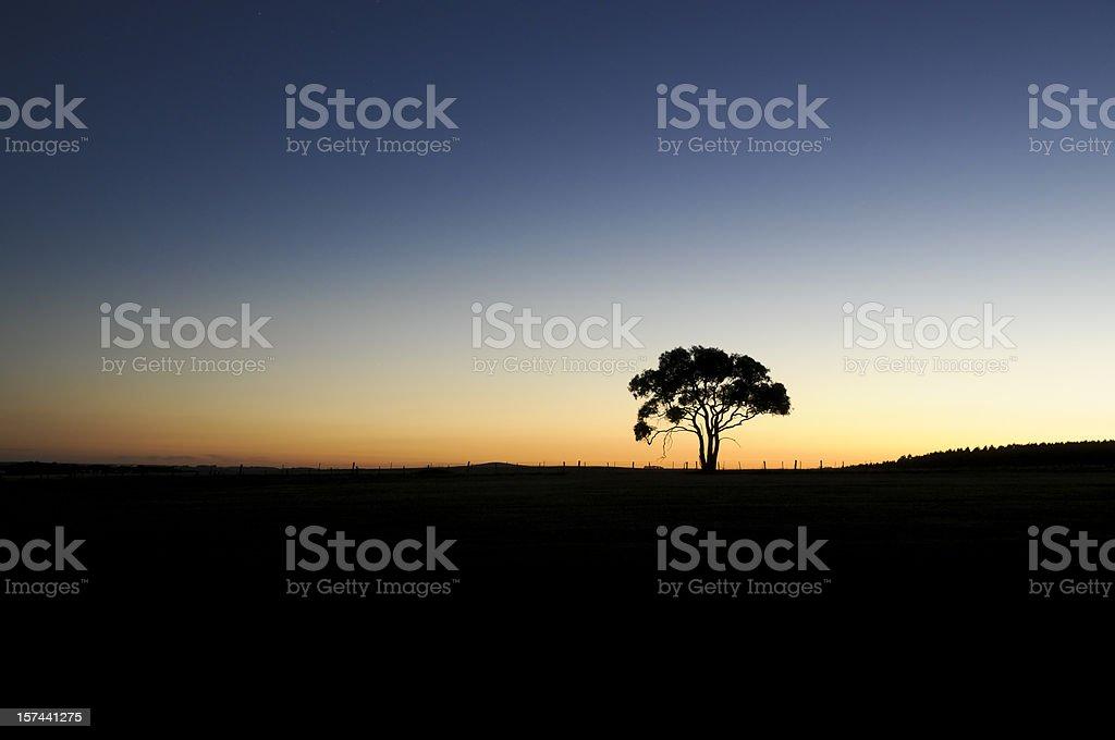 Lone Tree at Sunset stock photo