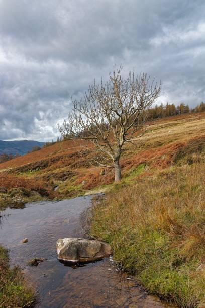 Lone Tree, Borrowdale stock photo