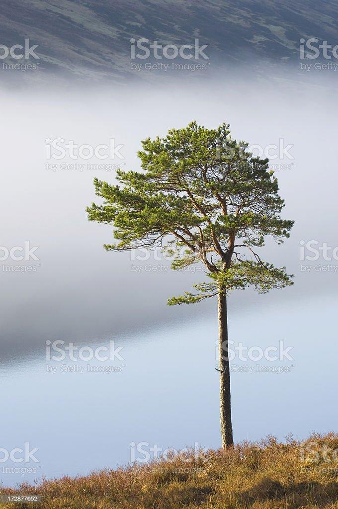 Lone tree by misty loch stock photo
