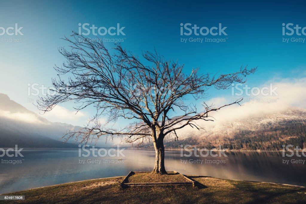 Lone Tree By The Lake stock photo