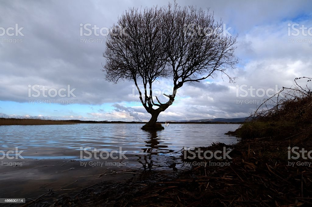 lone tree growing on pond stock photo