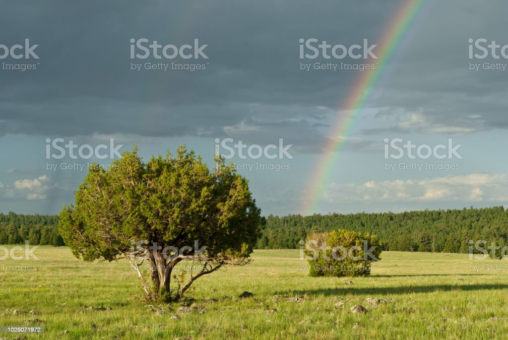 Rainbow and Lone Tree in a Meadow stock photo