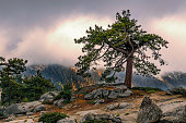 A stormy sky provides a fitting background for this lone tree on top of Buena Vista Mountain Peak. The sun peaking through the clouds adds to the dramatic view.