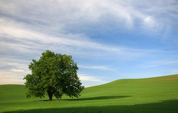 木のグリーンフィールド ストックフォト