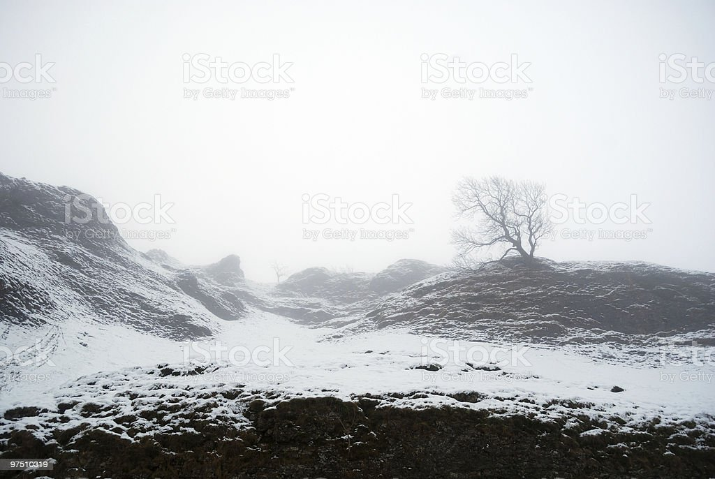 Lone Tree in a snow scene. royalty-free stock photo