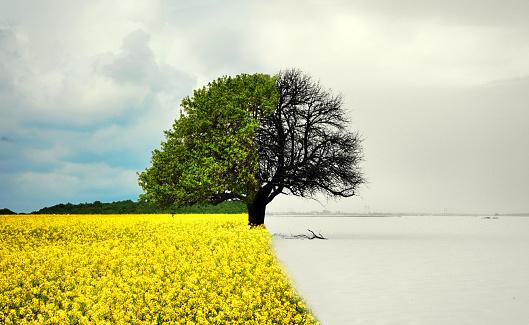 lone tree in all seasons - beautiful landscape in Romania