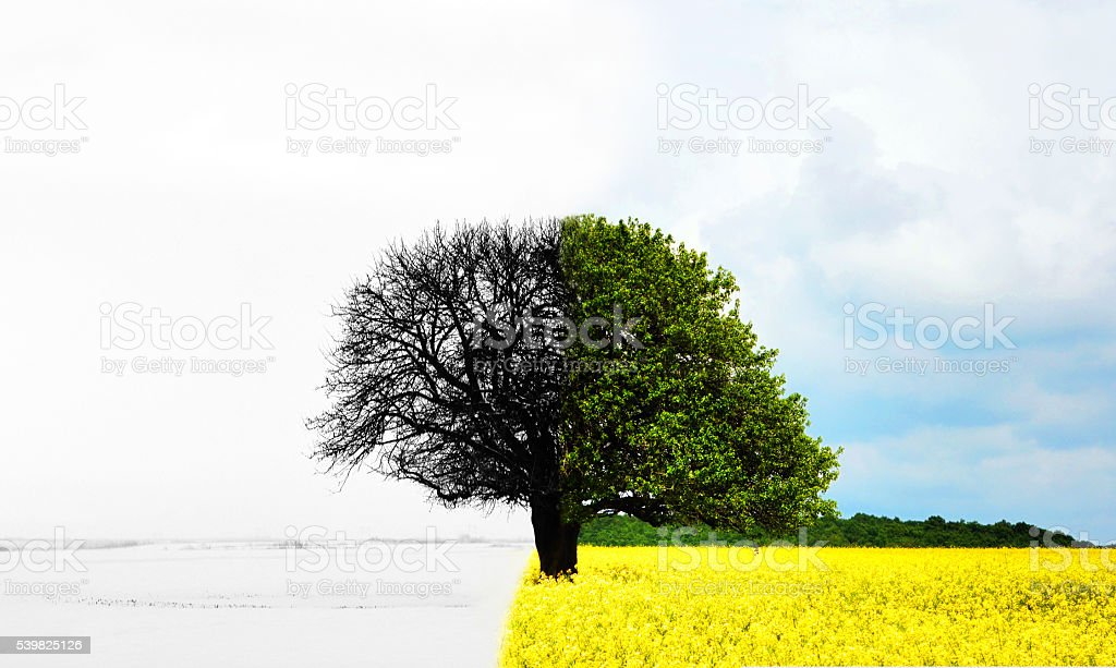 lone tree in all seasons stock photo