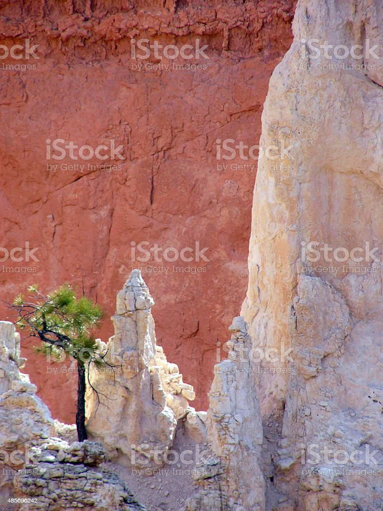 Lone tree in Bryce Canyon stock photo