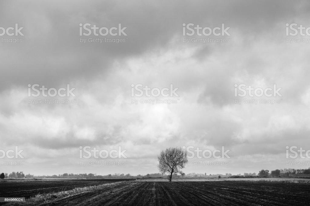 Árvore solitária no Fens - foto de acervo