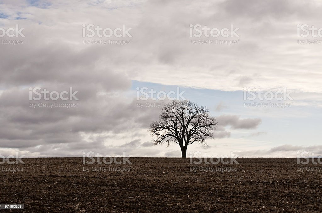 Lone Tree in Field at Dusk royalty-free stock photo