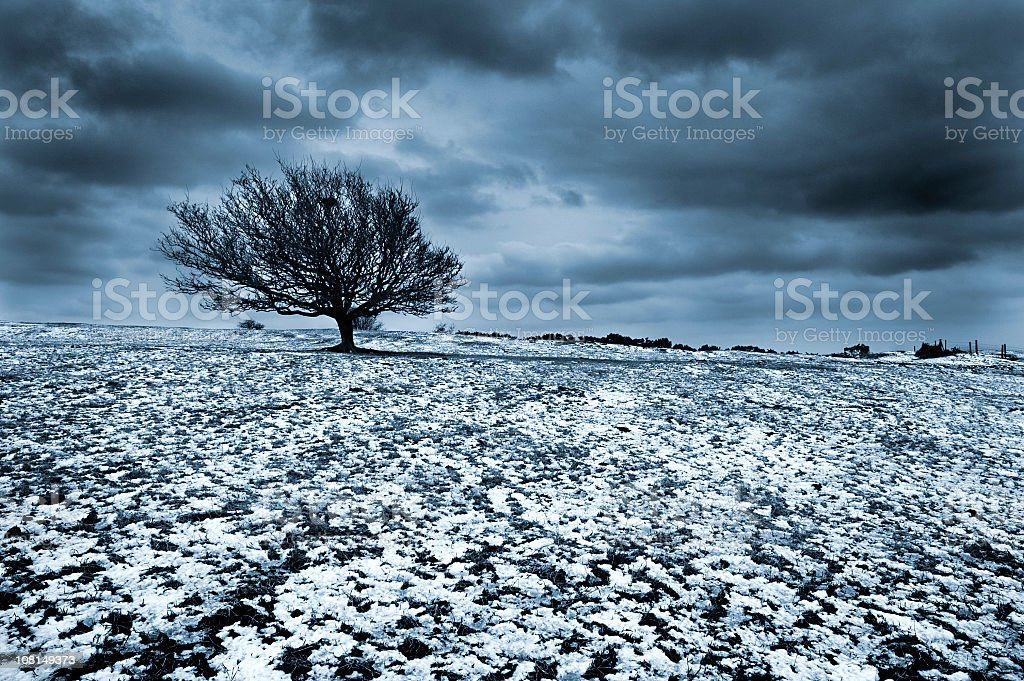 Lone Tree in Field Covered by Snow with Storm Clouds royalty-free stock photo