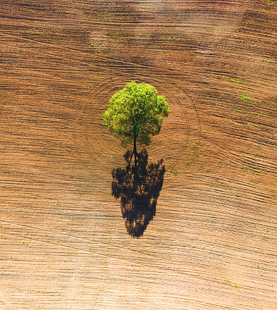 Aerial drone view of a single tree surrounded by freshly turned soil.