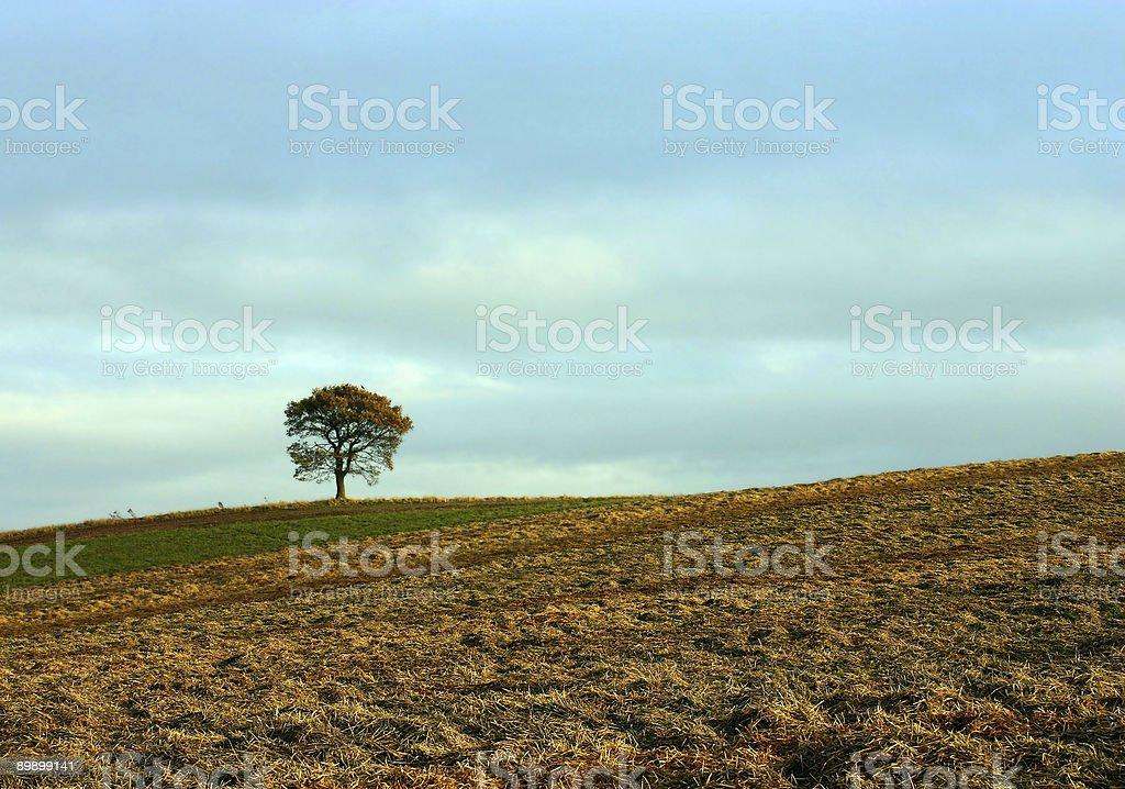 lone tree in golden dusk light royalty-free stock photo