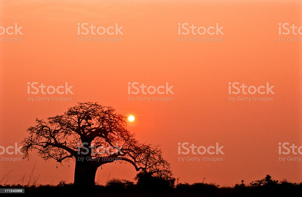 A lone tree in Kissama National Park in Angola at sunset stock photo